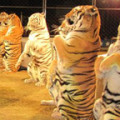 shriners circus, tigers, parenting, kids, blog, canadianmomeh, blog, blogger, blogging